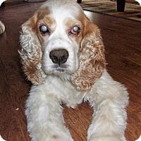 Adopt A Pet :: Carmelo - Sacramento, CA