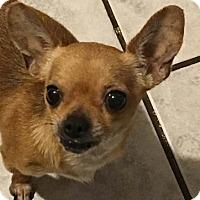 Adopt A Pet :: Medea - Brooksville, FL
