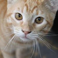 Adopt A Pet :: Moe - Fort Lauderdale, FL