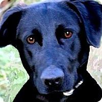 Adopt A Pet :: BOOMER(HAPPY-PLAYFUL-FUN!!! - Wakefield, RI
