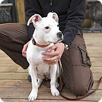 Adopt A Pet :: Maggie - Reisterstown, MD
