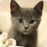 Adopt A Pet :: Sephora - Canoga Park, CA