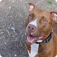 Adopt A Pet :: GEORGIA - Decatur, IL