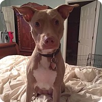 Adopt A Pet :: Coco - Coral springs, FL
