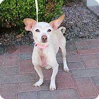 Adopt A Pet :: JONES - Las Vegas, NV