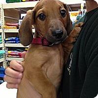 Adopt A Pet :: Nemo - Grand Rapids, MI