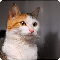 Adopt A Pet :: Carrie - Lunenburg, MA