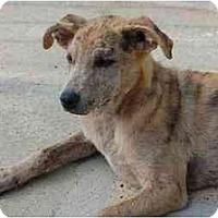Adopt A Pet :: Pebbles - Chula Vista, CA
