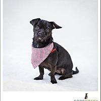 Adopt A Pet :: Little Bit - Morganville, NJ