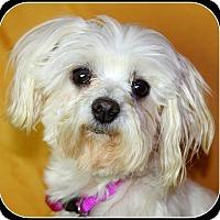 Adopt A Pet :: TUESDAY - ADOPTION PENDING - Little Rock, AR