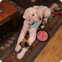 Adopt A Pet :: RALEIGH - Melbourne, FL