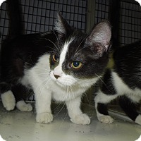 Adopt A Pet :: Pickles - Medina, OH