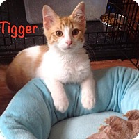Adopt A Pet :: Tigger - Marlton, NJ