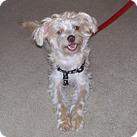 Adopt A Pet :: Lucy - ADOPTED - Tipp City, OH