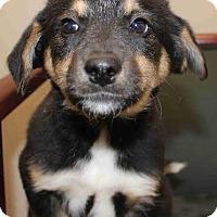 Adopt A Pet :: Petra - Portland, ME