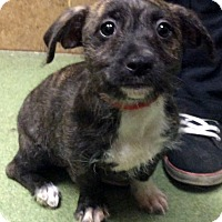 Adopt A Pet :: CADENCE (video) - Los Angeles, CA