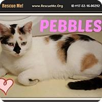 Adopt A Pet :: Pebbles - Highland, MI