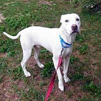 Adopt A Pet :: FRECKLES - Hampton Bays, NY