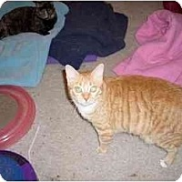 Adopt A Pet :: Lizzy - Hesperia, CA