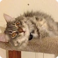 Adopt A Pet :: Macy - Modesto, CA