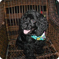 Adopt A Pet :: MANDIE - Raleigh, NC