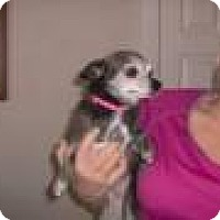 Adopt A Pet :: Sweetiepie - Seattle, WA