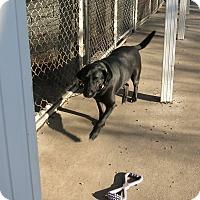 Adopt A Pet :: Roxie - Geneseo, IL