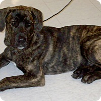Adopt A Pet :: Jackson 2016 (m/c) - Chesterfield, MI