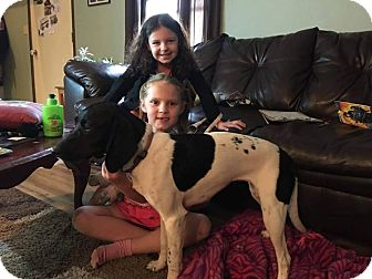 German Shorthaired Pointer/Beagle Mix Dog for adoption in ROME, New York - Oreo 3