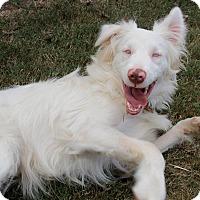 Adopt A Pet :: Zonder - Marietta, GA