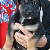 Adopt A Pet :: Dakota - Simi Valley, CA