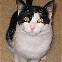 Adopt A Pet :: B.W. - San Antonio, TX
