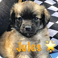 Adopt A Pet :: Jules - Boca Raton, FL