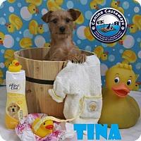 Adopt A Pet :: Tina - Arcadia, FL