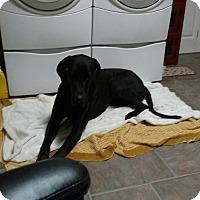 Adopt A Pet :: Chief - Monroe, NC