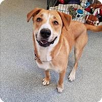 Adopt A Pet :: Elvira - Delaware, OH