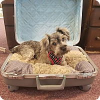Adopt A Pet :: MOLLY - PT ORANGE, FL