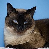Adopt A Pet :: Kioshi 11589 - Atlanta, GA
