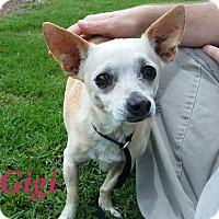 Adopt A Pet :: Gigi - El Cajon, CA