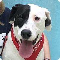Adopt A Pet :: Gunner - Evansville, IN