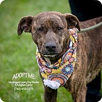 Adopt A Pet :: Bella - Urgent! - Zanesville, OH