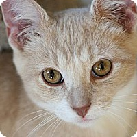 Adopt A Pet :: Avery - Chicago, IL