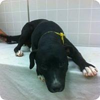 Adopt A Pet :: Thelma - Sacramento, CA