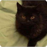 Adopt A Pet :: Susans= Jamie - Cincinnati, OH