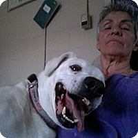 Adopt A Pet :: Kuma - Wallaceburg, ON