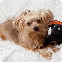 Adopt A Pet :: Frankie Lane - Seminole, FL