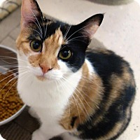 Adopt A Pet :: Twiggy - McDonough, GA