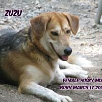 Spaniel (Unknown Type)/Husky Mix Dog for adoption in Huddleston, Virginia - ZuZu