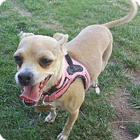 Adopt A Pet :: Tandie - Las Cruces, NM