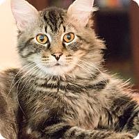 Adopt A Pet :: Rock - Chicago, IL